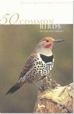 50 Common Birds of the Southwest