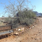 Nature Walk at Superstition Mountain - Lost Dutchman Museum - Bench beside #12, Ironwood Tree