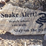 Nature Walk at Superstition Mountain - Lost Dutchman Museum - Snake Alert! Watch where you walk. Stay on the paths...